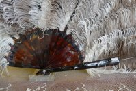 5 antique feather fan 1900