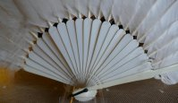 6 antique feather fan 1915