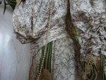 24 antique recpetion gown 1904