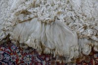 49 antique ALTMANN Battenburg lace dress 1904